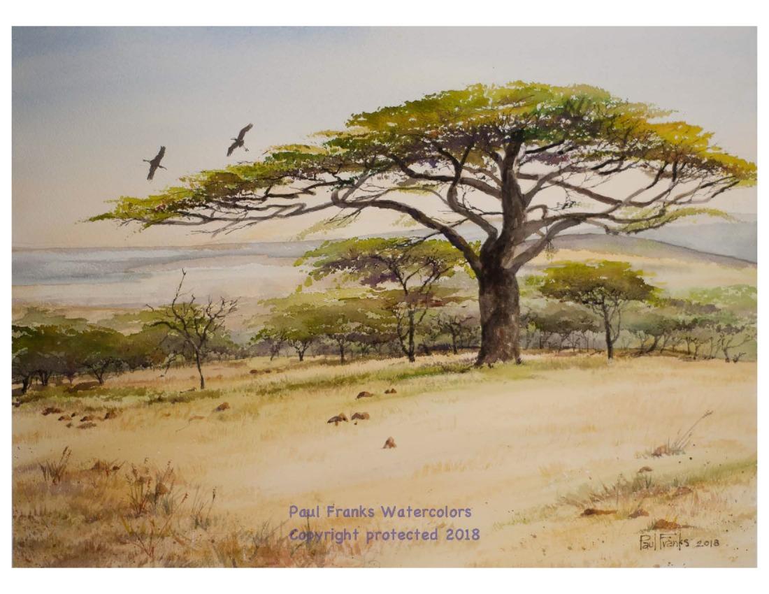 Acacia on the Maasai Mara Plain wm